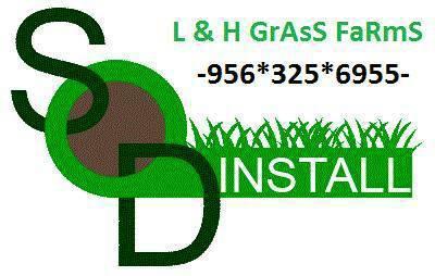 Floratam ( carpet grass ) Pallets