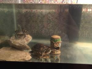 40 gal turtle Aquarium-heater-heat lamp-filter (KANSAS CITY)