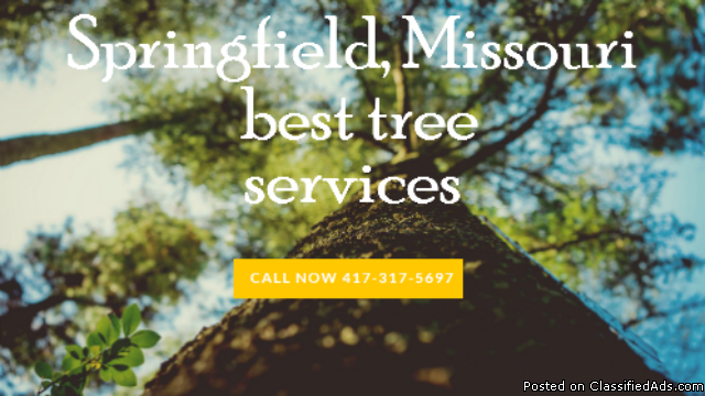417 Tree Services
